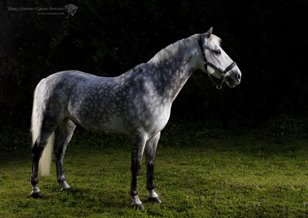 Horse portrait done with studio equipment in a back garden