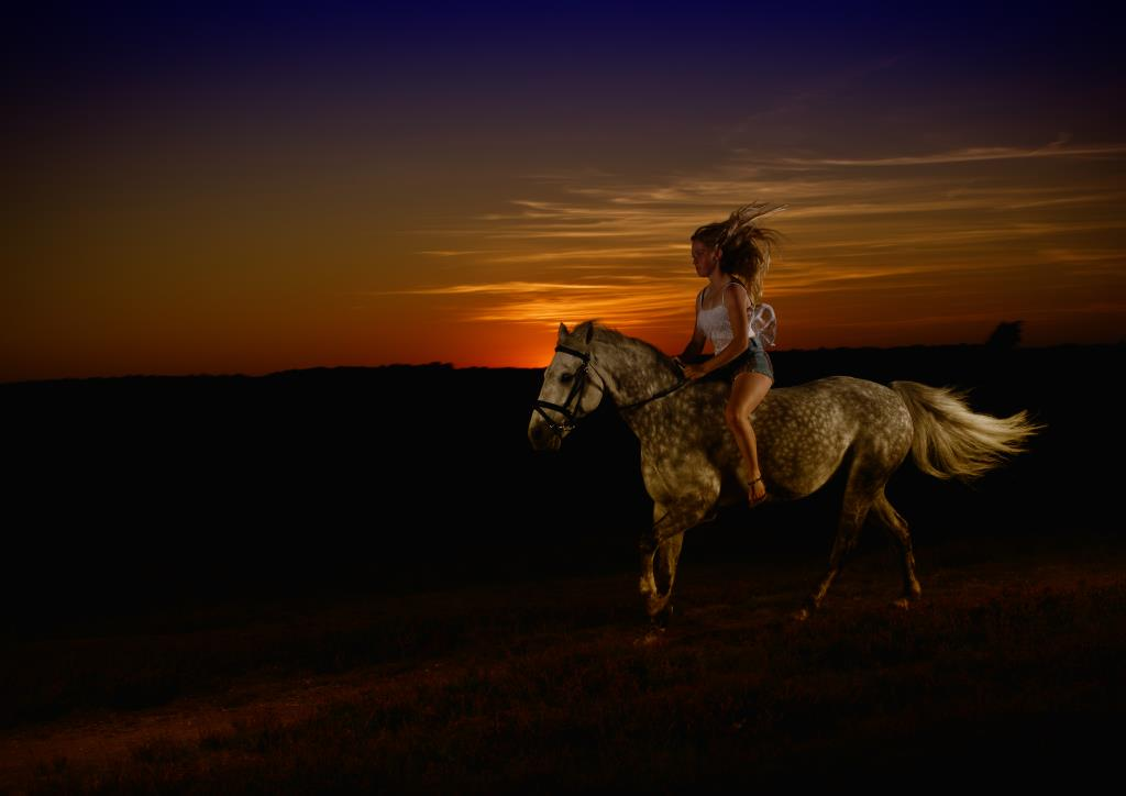 Equine photography using studio lights at sunset