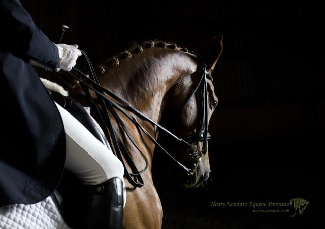 Equine photography of a working dressage partnership