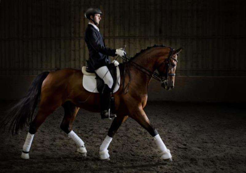 Dressage rider and horse portrait