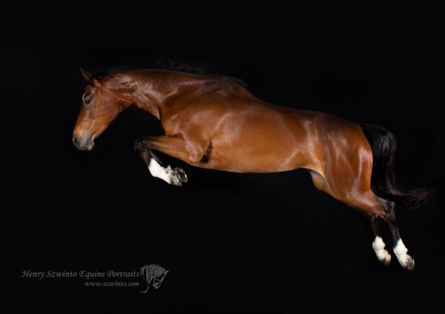 Action equine photography