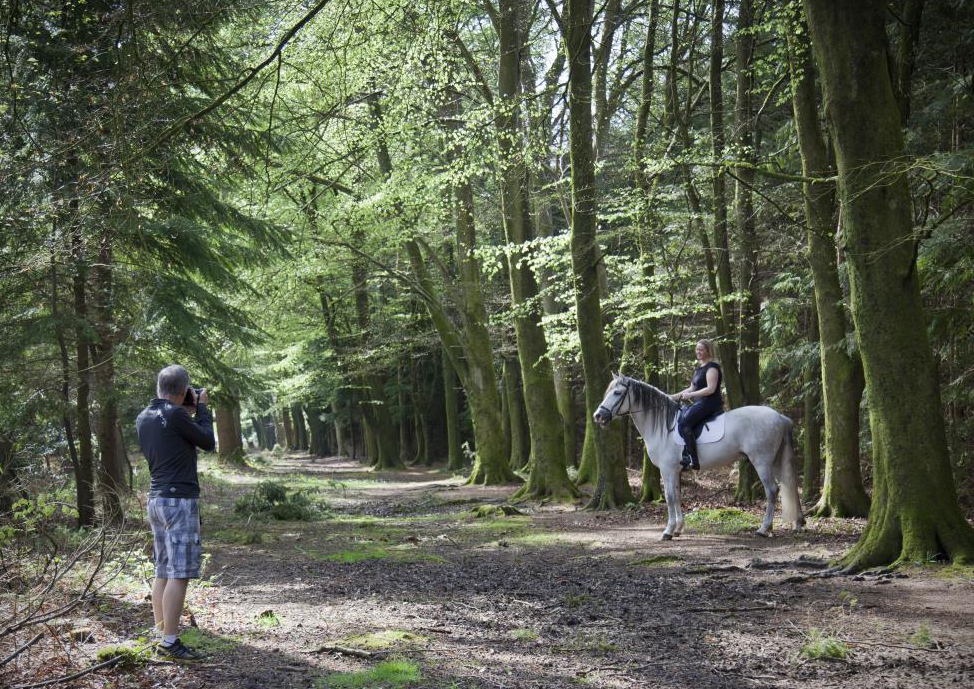 Equine Photography in the New Forest
