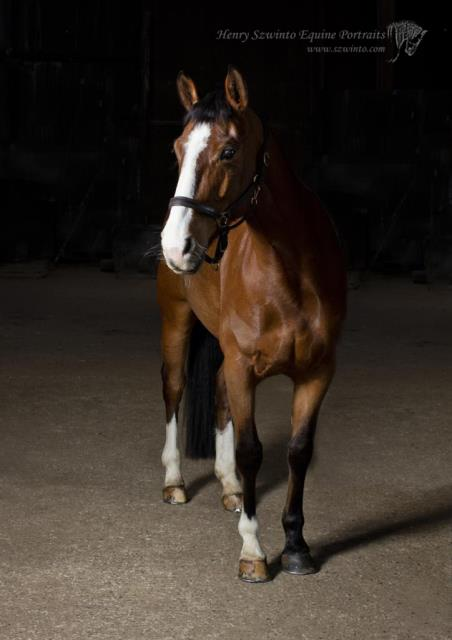Horse portrait using studio equipment in a barn