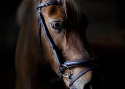 paddy-the-new-forest-pony