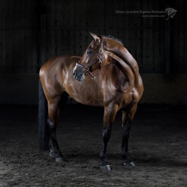 Honaovarian Horse Portrait