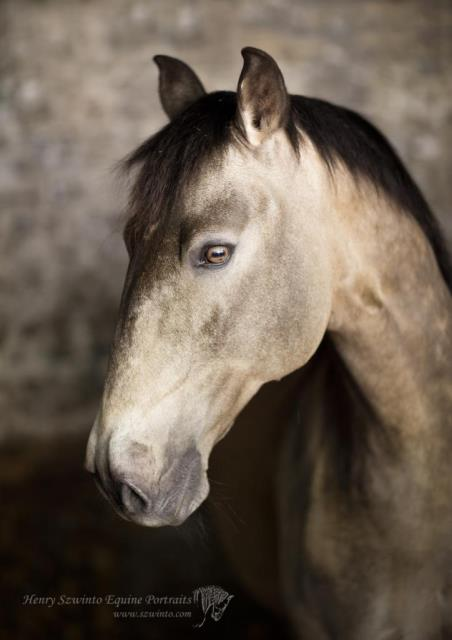 Horse portrait using reflectors at a stable door