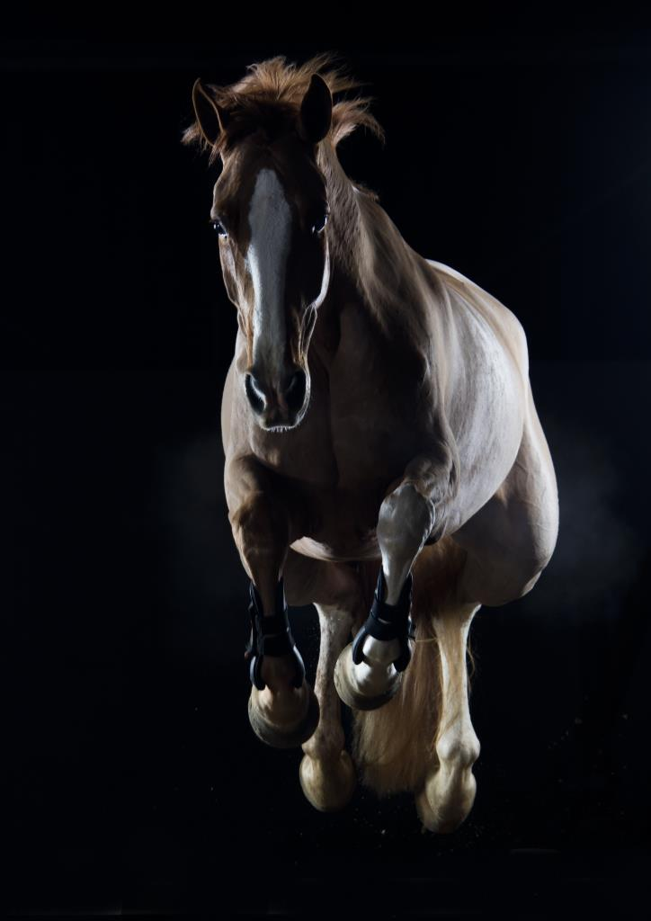 Jumping horse portrait