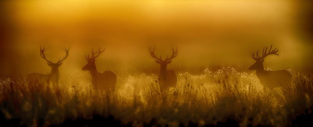 Red deer stags in the New Forest by Hampshire photographer Henry Szwinto