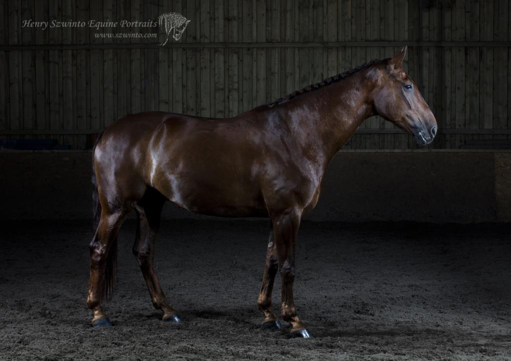 dressage-horse-2