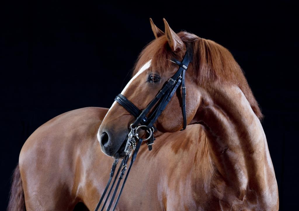 Equine portraits Farley Hall