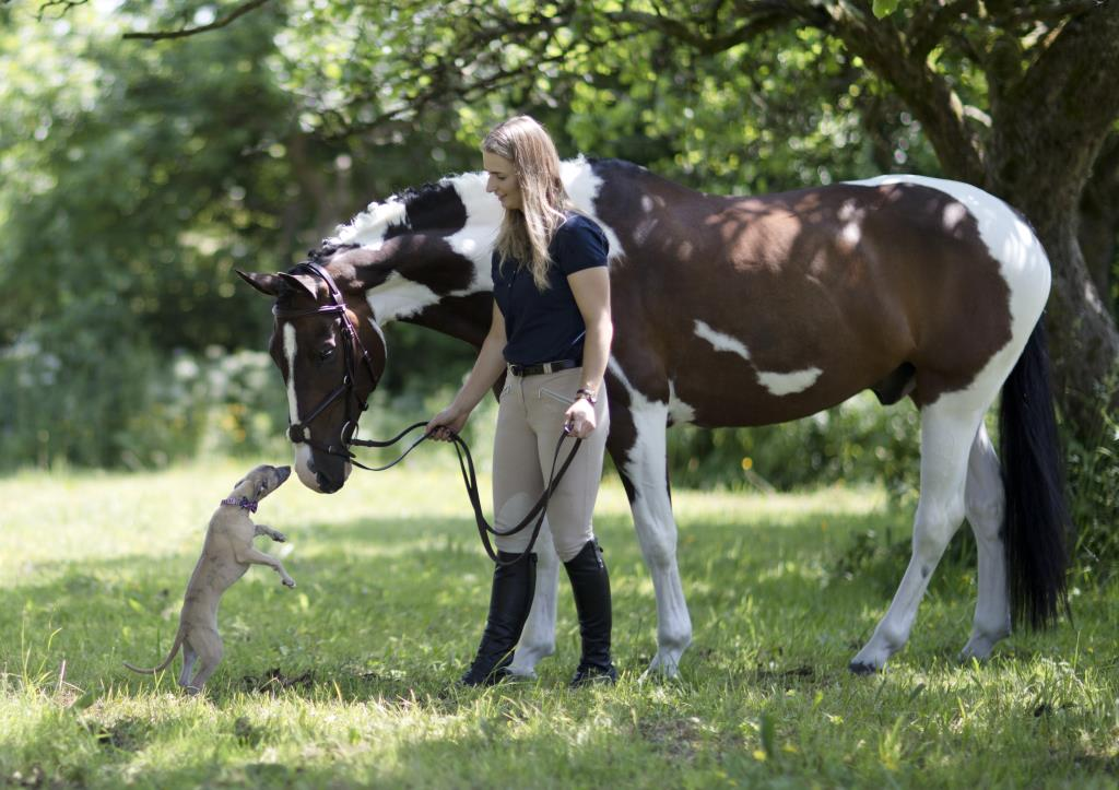 whippet dog and horse portrait photography new forest hampshire